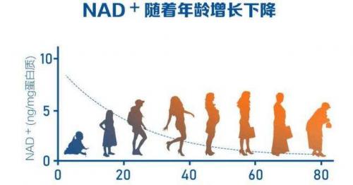 补充NAD +可拯救衰老女性的生殖能力